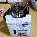 レーンキャッチャーEXの箱